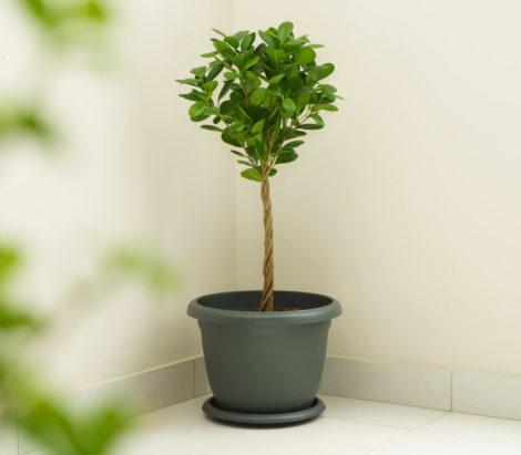 grey round planter