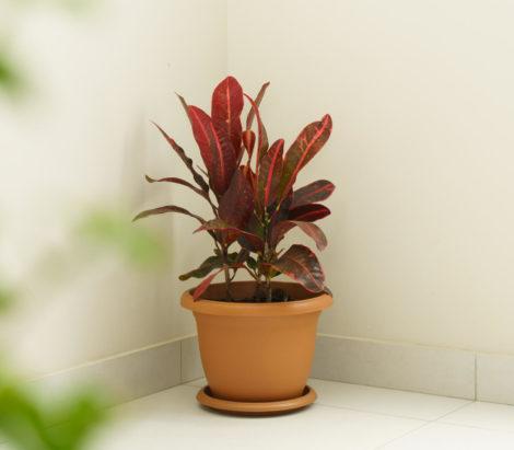 round planter